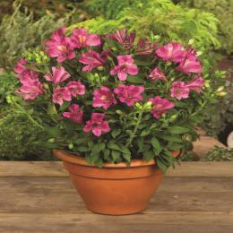 Benefits of buying plants online